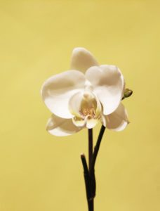 leaf flower flora branch